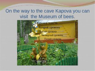 On the way to the cave Kapova you can visit the Museum of bees.