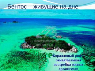 Бентос – живущие на дне Коралловый риф – самая большая постройка живых орган