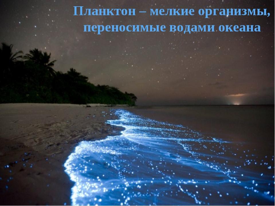 Планктон – мелкие организмы, переносимые водами океана