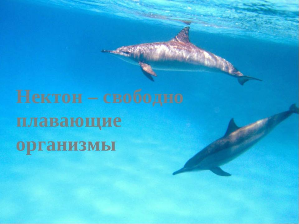 Нектон – свободно плавающие организмы