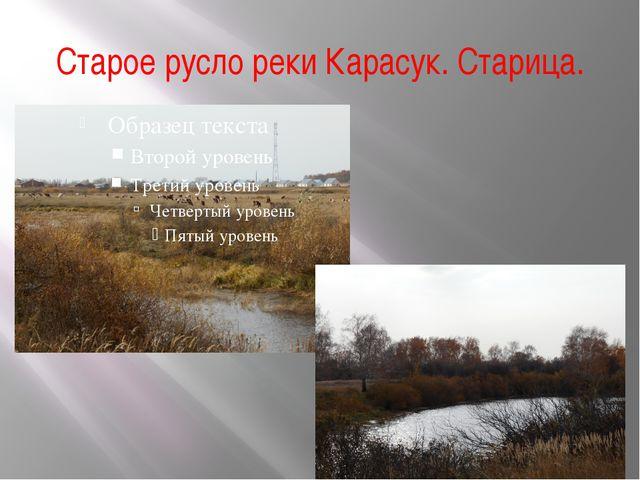 Старое русло реки Карасук. Старица.