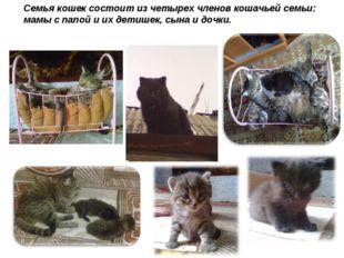 Семья кошек состоит из четырех членов кошачьей семьи: мамы с папой и их детиш