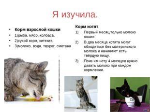 Я изучила. Корм взрослой кошки 1)рыба, мясо, колбаса. 2)сухой корм, китекат.