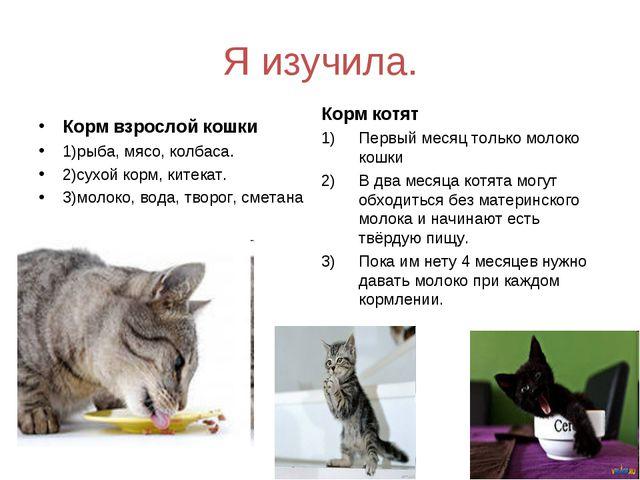 Я изучила. Корм взрослой кошки 1)рыба, мясо, колбаса. 2)сухой корм, китекат....