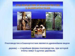 Пчеловодство в Башкортостане является древнейшим видом промысла. Бо́ртничеств