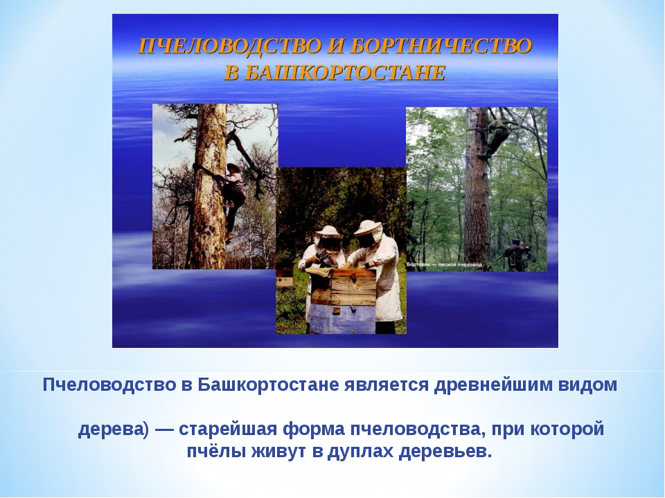 Пчеловодство в Башкортостане является древнейшим видом промысла. Бо́ртничеств...