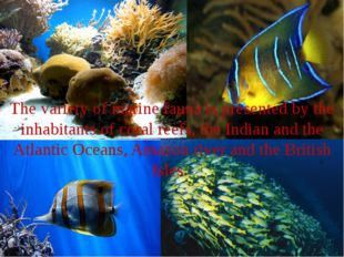 The variety of marine fauna is presented by the inhabitants of coral reefs, t