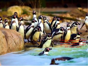 "Everybody, without exception, will be attracted by the ""penguin zone"". Here y"