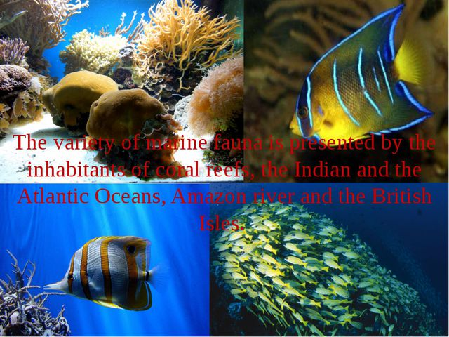 The variety of marine fauna is presented by the inhabitants of coral reefs, t...