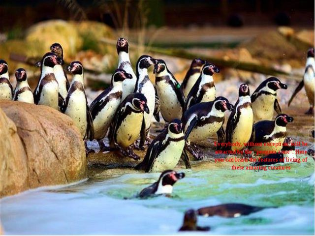 "Everybody, without exception, will be attracted by the ""penguin zone"". Here y..."