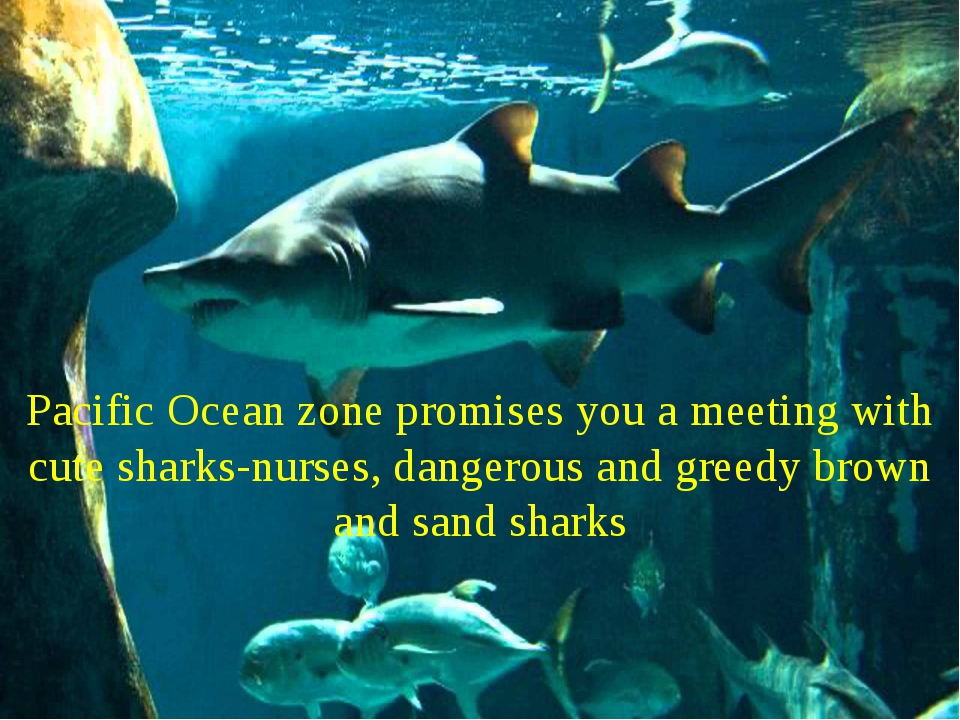 Pacific Ocean zone promises you a meeting with cute sharks-nurses, dangerous...