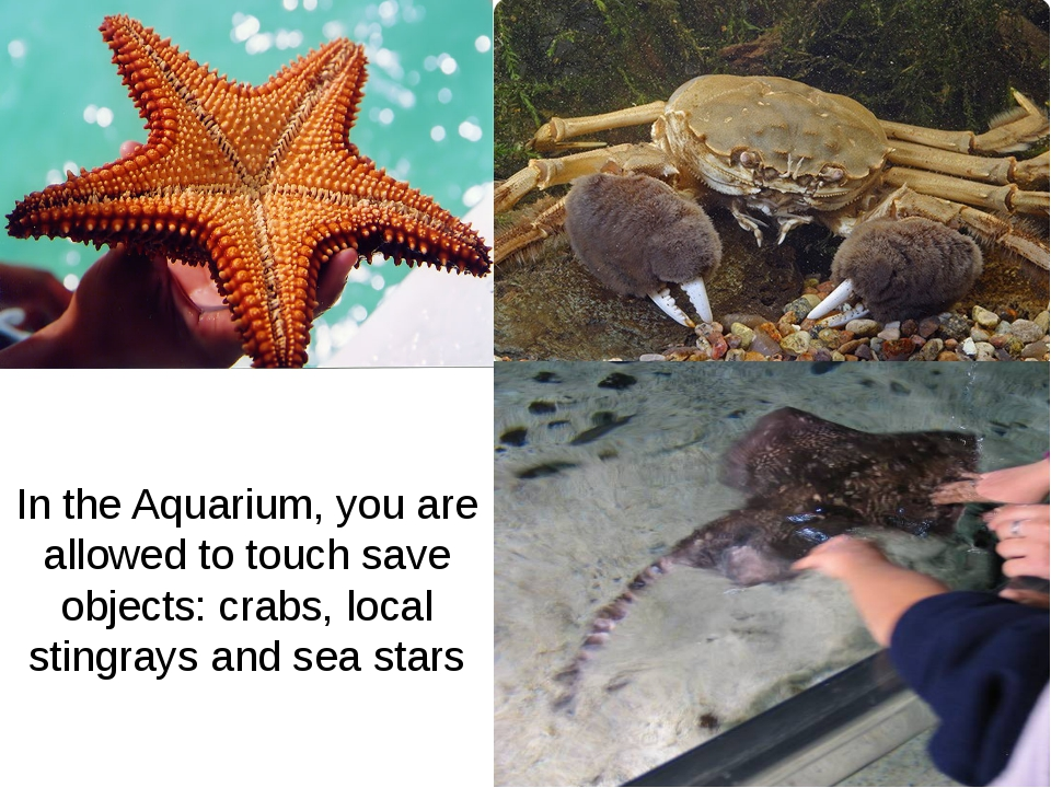 In the Aquarium, you are allowed to touch save objects: crabs, local stingray...