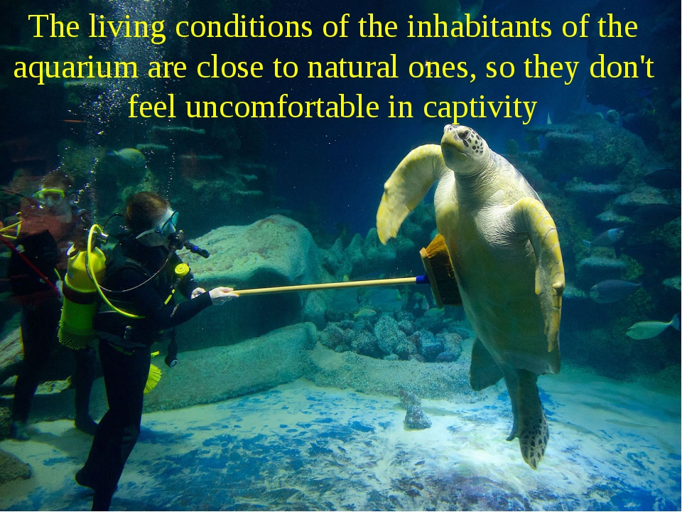 The living conditions of the inhabitants of the aquarium are close to natural...