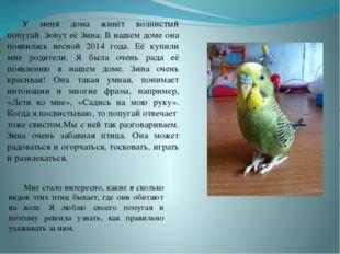 У меня дома живёт волнистый попугай. Зовут её Зина. В нашем доме она появил