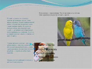 Из книг я узнала, что попугаи – жители тропических лесов. У них яркое оперен