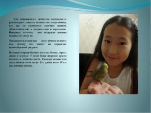 Для начинающего любителя специалисты рекомендуют завести волнистого попугай