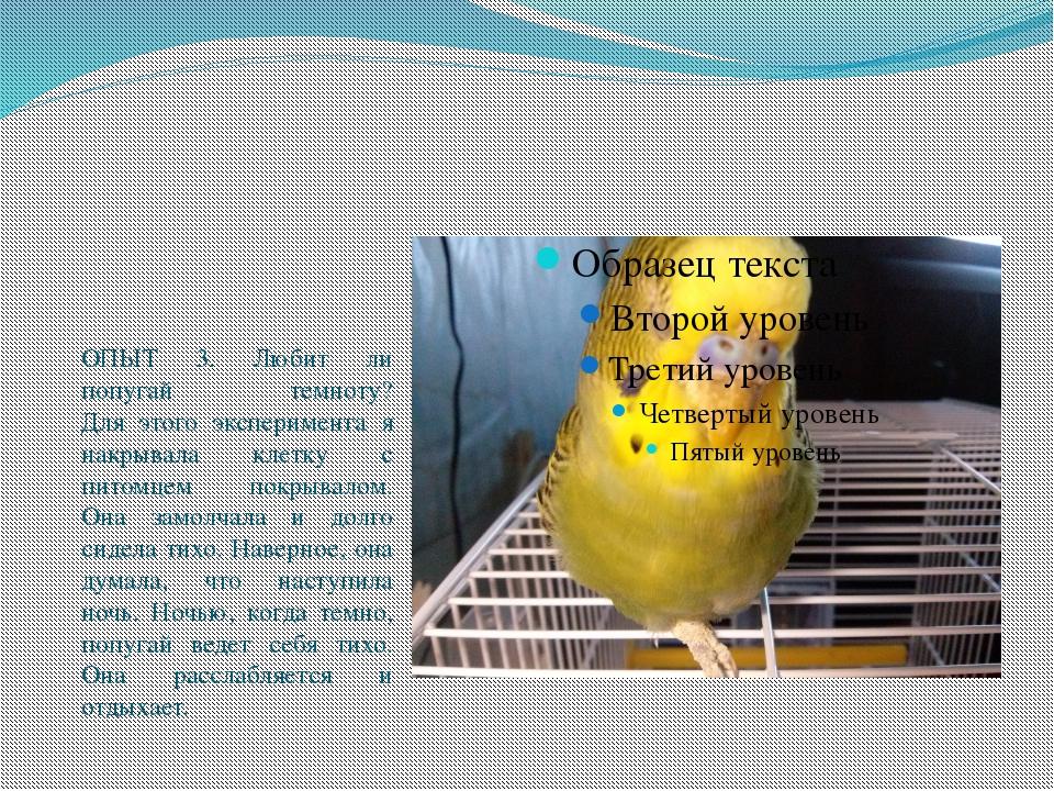 ОПЫТ 3. Любит ли попугай темноту? Для этого эксперимента я накрывала клетку...
