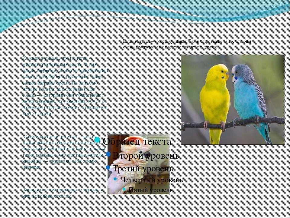 Из книг я узнала, что попугаи – жители тропических лесов. У них яркое оперен...