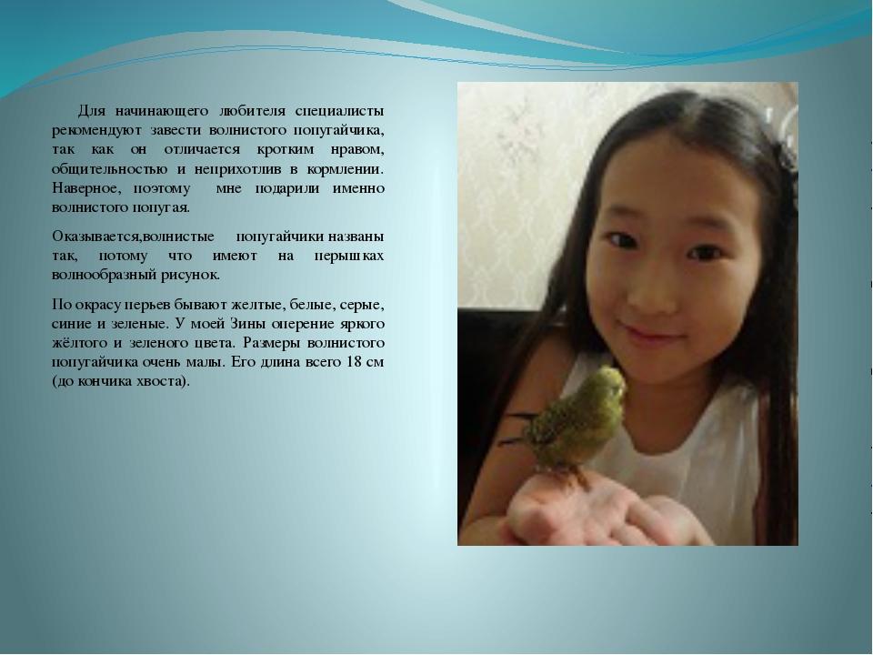 Для начинающего любителя специалисты рекомендуют завести волнистого попугай...