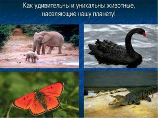Как удивительны и уникальны животные, населяющие нашу планету!