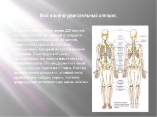 Мой опорно-двигательный аппарат. В скелете ребёнка примерно 220 костей, котор