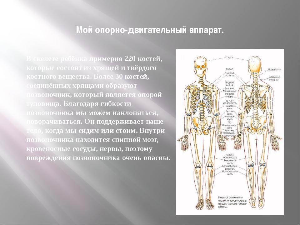 Мой опорно-двигательный аппарат. В скелете ребёнка примерно 220 костей, котор...