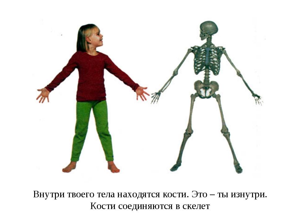 Внутри твоего тела находятся кости. Это – ты изнутри. Кости соединяются в ске...