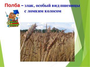 Полба – злак, особый вид пшеницы с ломким колосом