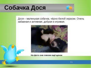 Собачка Дося Дося – маленькая собачка, чёрно-белой окраски. Очень забавная и