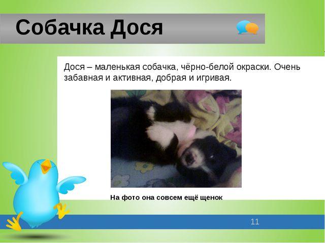 Собачка Дося Дося – маленькая собачка, чёрно-белой окраски. Очень забавная и...