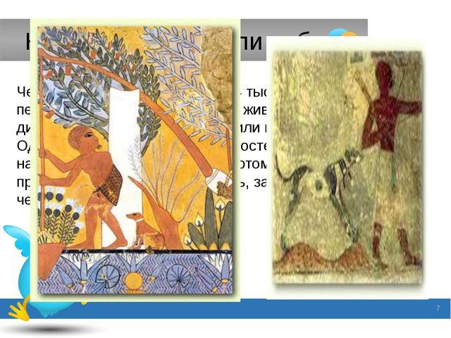 Как люди приручили собак. Человек приручил собак ещё 14 тысяч лет назад. Но п...