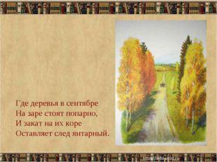 * Где деревья в сентябре На заре стоят попарно, И закат на их коре Оставляет