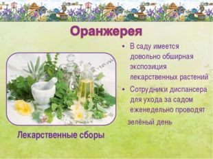 В саду имеется довольно обширная экспозиция лекарственных растений Сотрудники