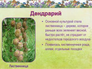 Основной культурой стала лиственница – дерево, которое раньше всех зеленеет в