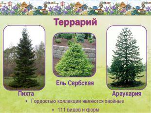 Гордостью коллекции являются хвойные 111 видов и форм Ель Сербская Пихта Арау