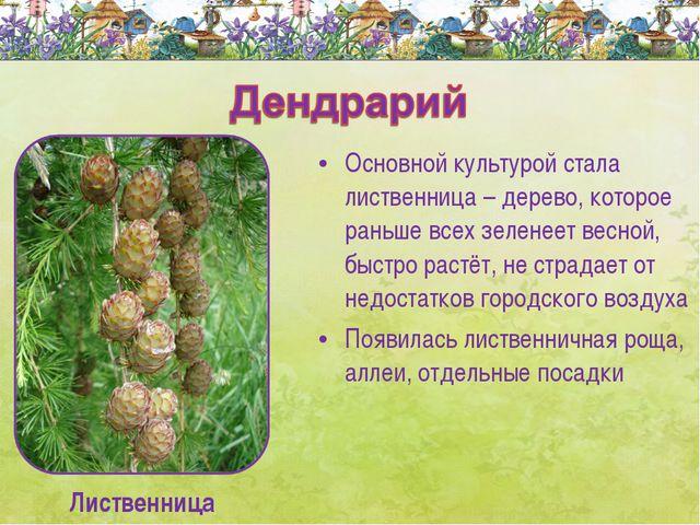 Основной культурой стала лиственница – дерево, которое раньше всех зеленеет в...