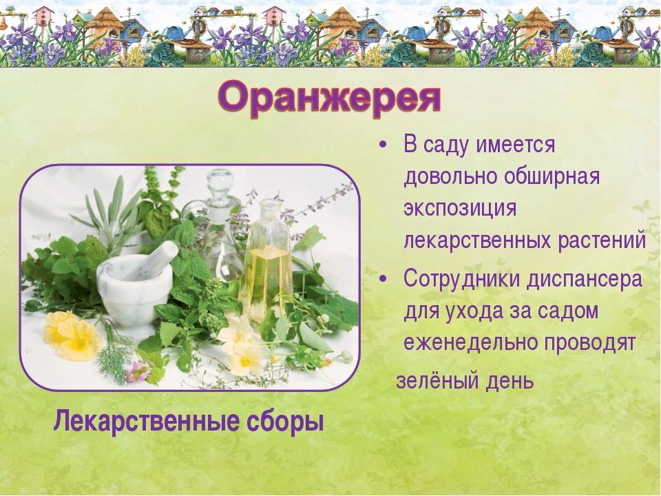 В саду имеется довольно обширная экспозиция лекарственных растений Сотрудники...