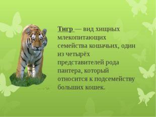 Тигр — вид хищных млекопитающих семейства кошачьих, один из четырёх представи