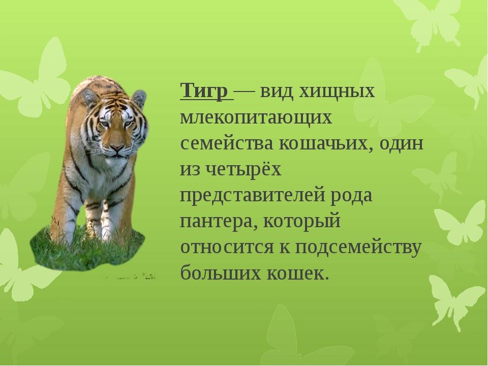 Тигр — вид хищных млекопитающих семейства кошачьих, один из четырёх представи...