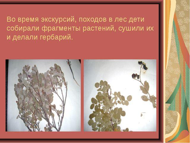 Во время экскурсий, походов в лес дети собирали фрагменты растений, сушили их...