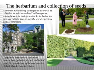 The herbarium and collection of seeds Herbarium Kev is one of the largest in