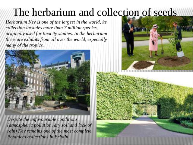 The herbarium and collection of seeds Herbarium Kev is one of the largest in...