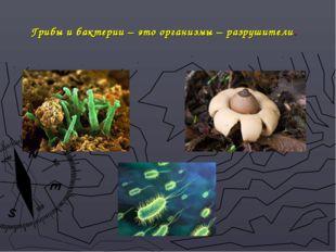 Грибы и бактерии – это организмы – разрушители.