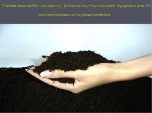Главная часть почвы – это перегной. Из него под действием бактерий образуются