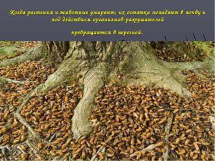 Когда растения и животные умирают, их остатки попадают в почву и под действие