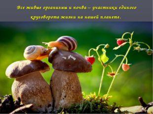 Все живые организмы и почва – участники единого круговорота жизни на нашей пл