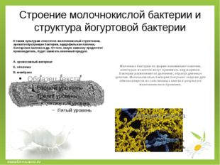 Строение молочнокислой бактерии и структура йогуртовой бактерии К таким культ