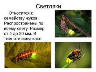 Светляки Относится к семейству жуков. Распространены по всему свету. Размер о