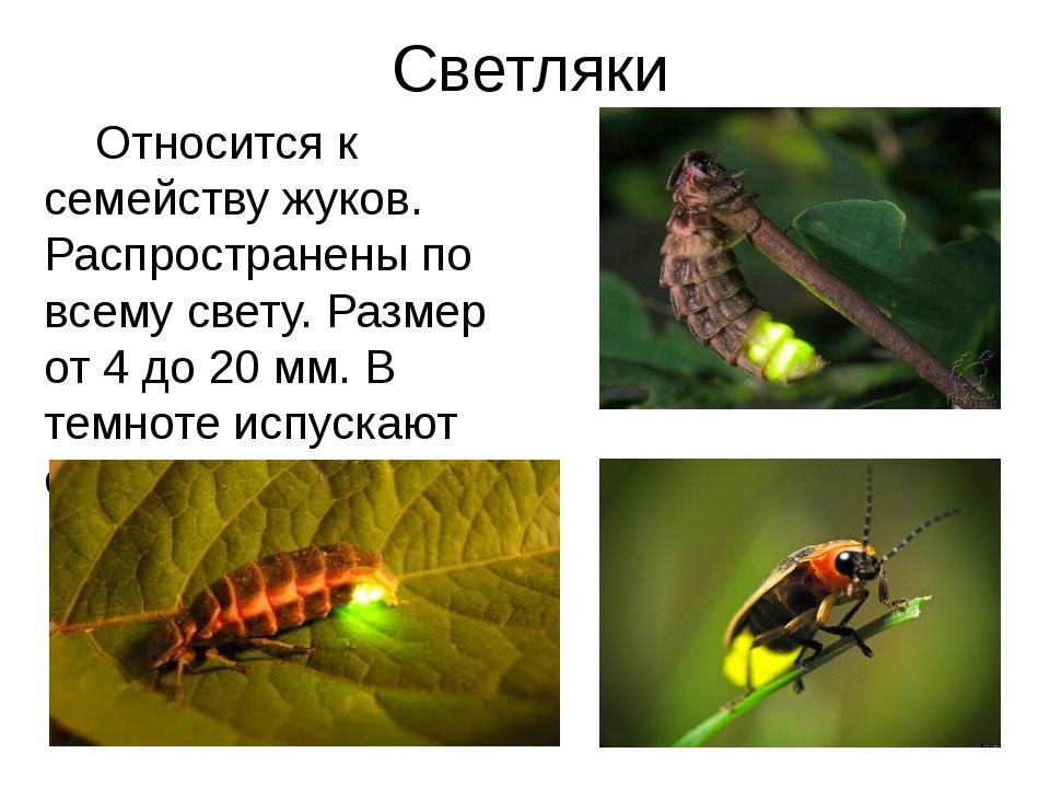 Светляки Относится к семейству жуков. Распространены по всему свету. Размер о...