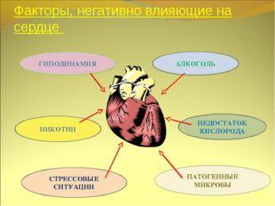 Факторы, негативно влияющие на сердце ГИПОДИНАМИЯ НИКОТИН СТРЕССОВЫЕ СИТУАЦИИ